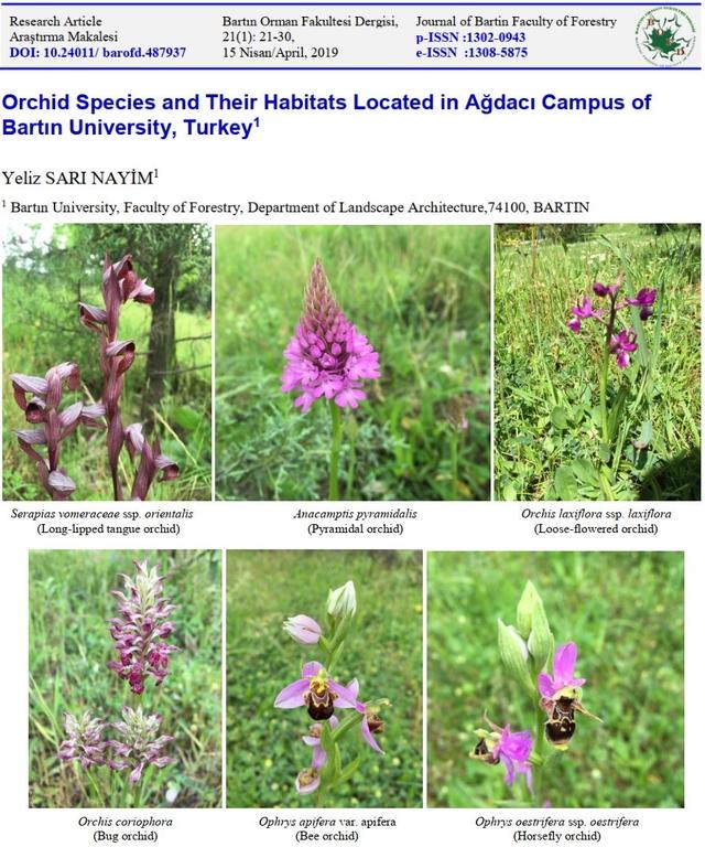 Ağdacı Yerleşkemizde Bulunan Orkide Türleri ve Habitatları