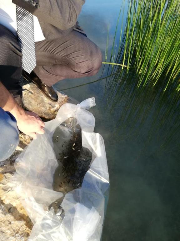 Kutlubey Kampüsü Göletine 5000 Yavru Sazan Balığı Bırakıldı